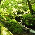 写真: 緑あふれる