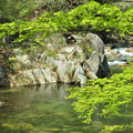 写真: 緑の流れ