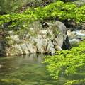 Photos: 緑の流れ