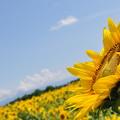 写真: 夏の風