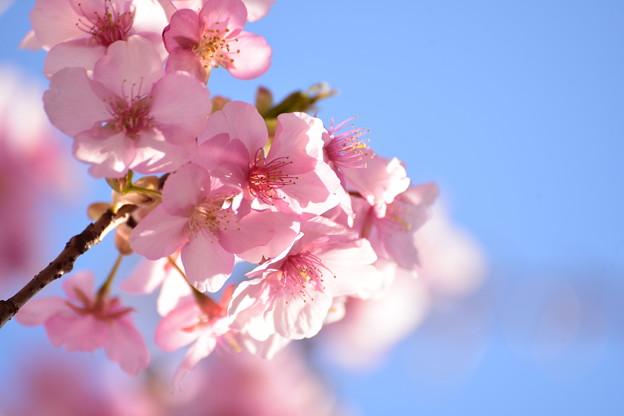 Photos: 春の予感