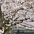 写真: 春爛漫の二人