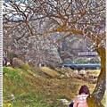 Photos: アートな春心