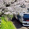 写真: 春色沿線17