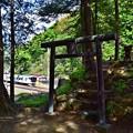 Photos: 新緑の裏高尾(5)