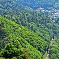 新緑香る高尾山