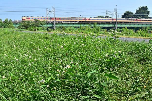 花咲く河川敷(2)
