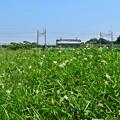 写真: 花咲く河川敷(3)