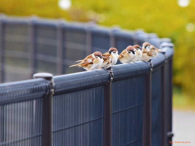Nearby Sparrows