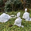 写真: なごり雪だるま