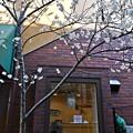 写真: 路地裏の桜下美人