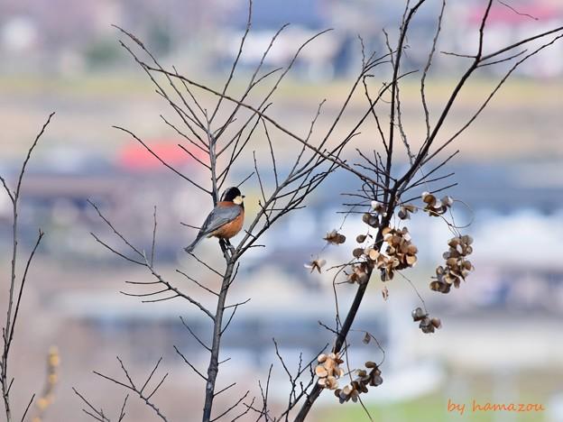 Photos: 春展望