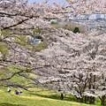 写真: 春の丘陵