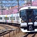 写真: 春爛漫かいじ号