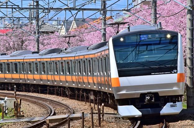 写真: 春爛漫中央特快