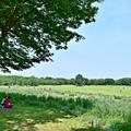 写真: 新緑の木陰で