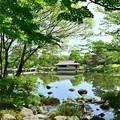 写真: 緑葉もみじ
