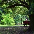 写真: alone