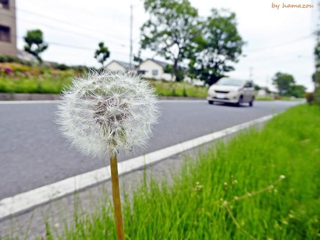 Photos: 道端