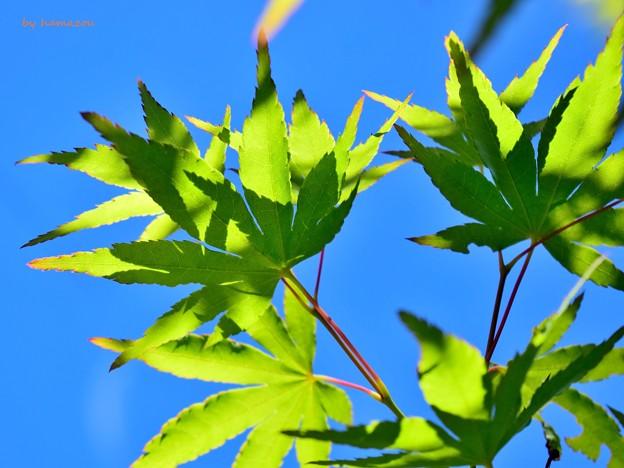 Green in Skies