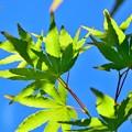写真: Green in Skies