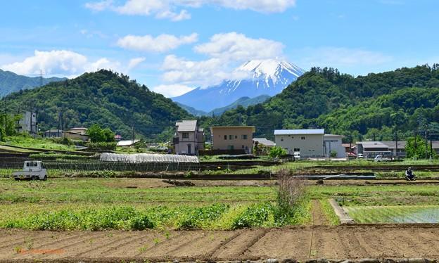 Photos: 皐月富士