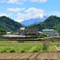 写真: 皐月富士