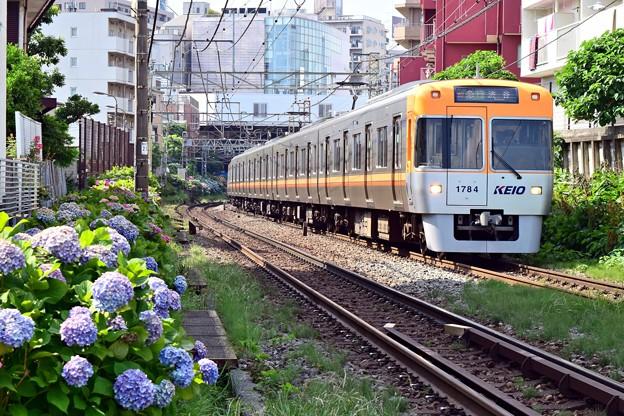 写真: あじさい電車