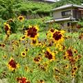 Photos: 夏到来の裏高尾