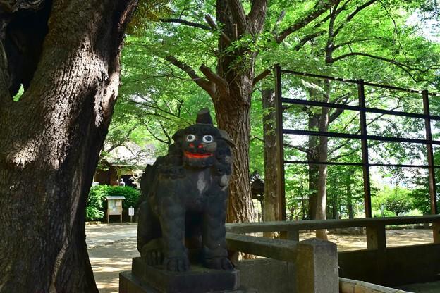 Photos: 笑う狛犬