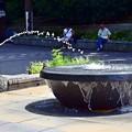 写真: 上野公園の蛙
