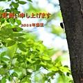 Photos: 暑中見舞い(2018)