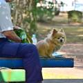 写真: 公園のベンチで