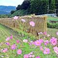 Photos: 山郷の秋(3)