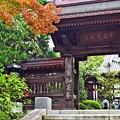 写真: 秋色の山門