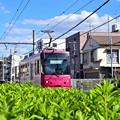Photos: 秋晴れ都電