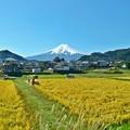 写真: 秋香る富士(3)