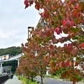 写真: 紅葉モノレール