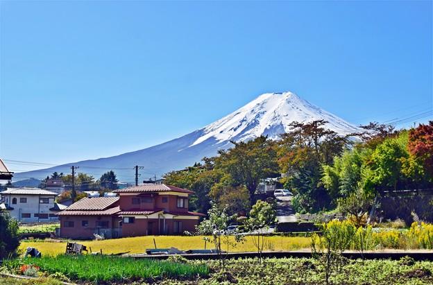 写真: 秋香る富士(5)
