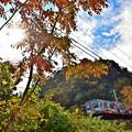 写真: 秋色沿線(25)