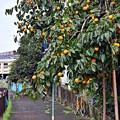 写真: 柿景色(^^)