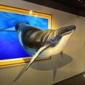 Photos: クジラ飛び出す!