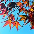 秋の透過光