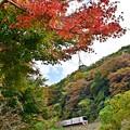 写真: 秋色沿線(30)