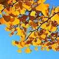 写真: Yellow & Sky blue
