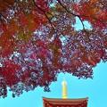 秋空に輝く