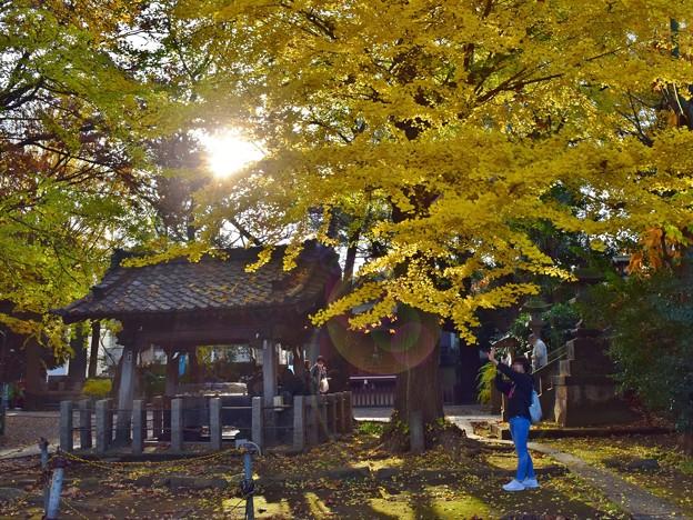 写真: 銀杏の木の下で(4)