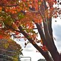 Photos: 秋色沿線(40)