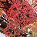 Photos: 秋彩