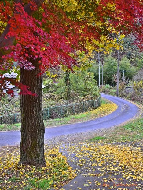 写真: 残秋の小路